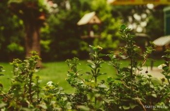How to avoid the entry of intruders protecting your garden